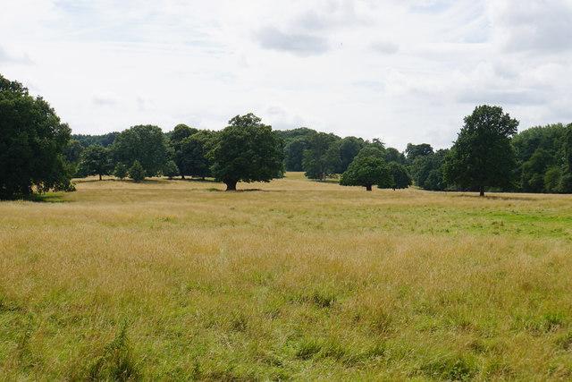 Parkland at Shugborough Hall