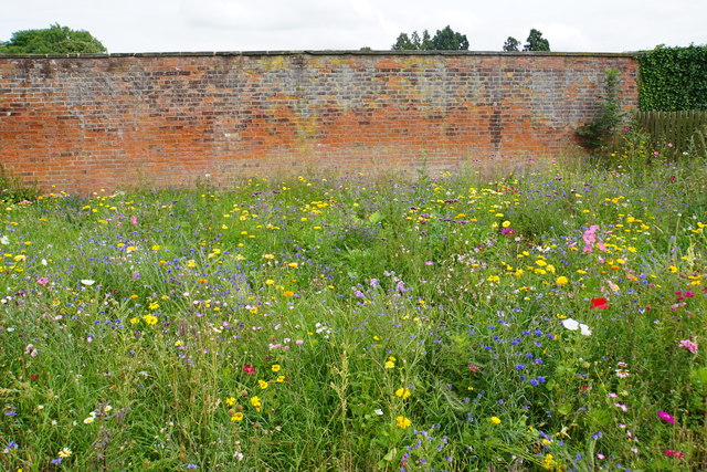 Wild flower bed by the walled garden
