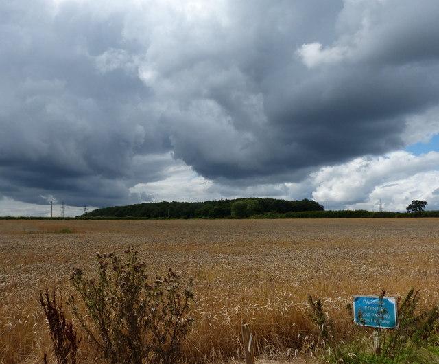 Farmland and wood at New Lubbesthorpe
