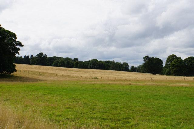 Parkland in Shugborough Park
