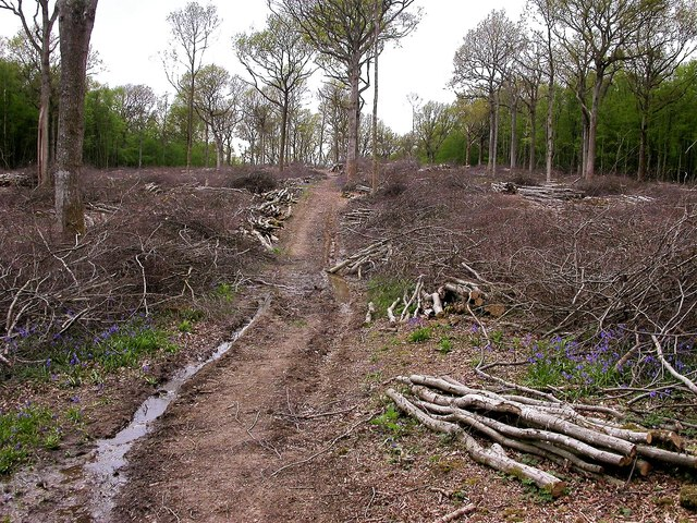 Woodland management in Brede High Woods