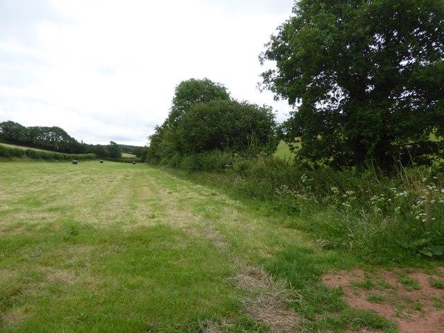 Hedge and stream