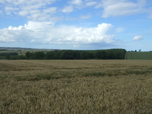 Cereal crop, Edington