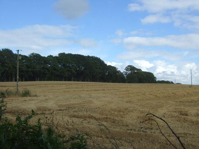 Harvest in progress, Edington Hill