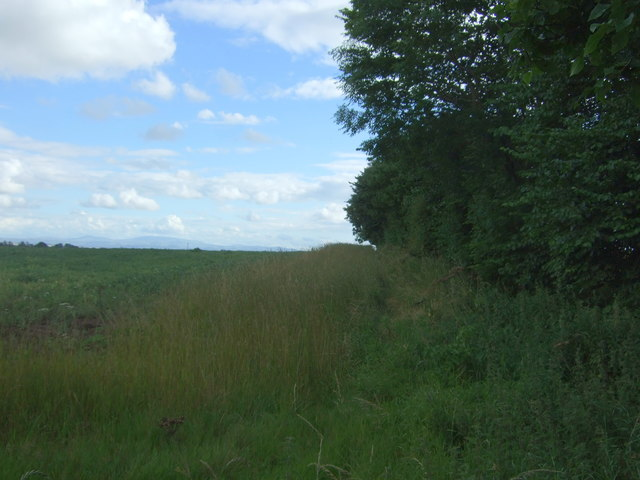 Crop field and hedgerow, West Foulden