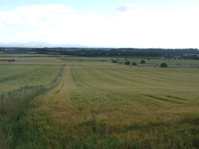 Cereal crops south of Foulden
