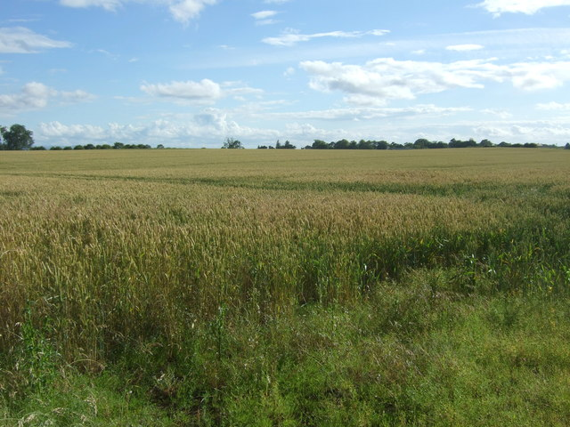 Cereal crop off National Cycle Route 76