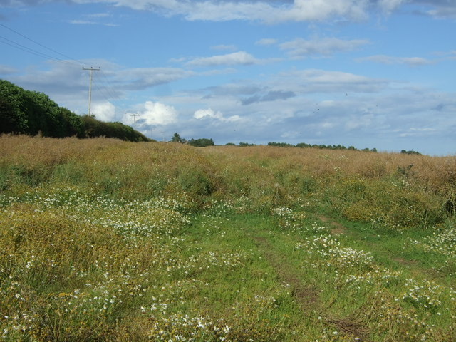 Oilseed rape crop near High Letham
