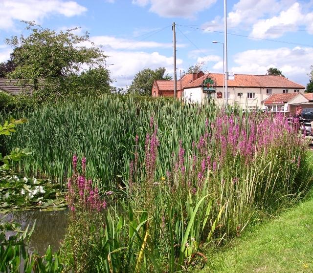Pond in the Memorial Garden, Poringland