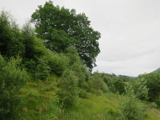 Regenerating woodland, Glen Strae