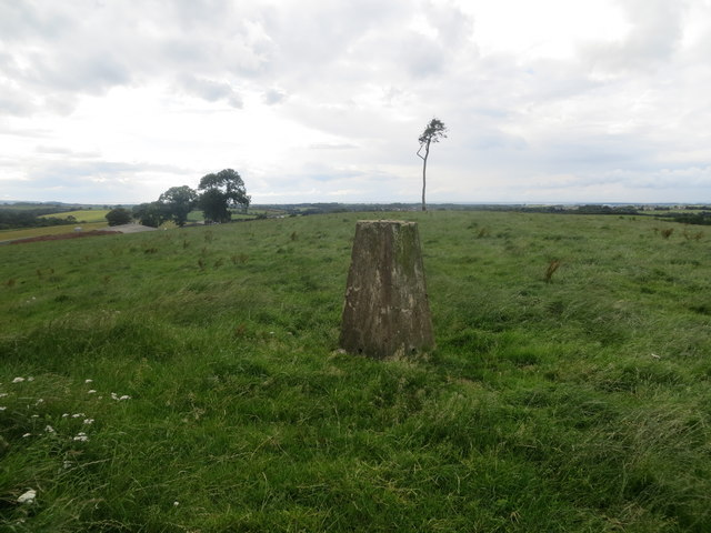 Trig point and lone tree in a field on Raith Hill