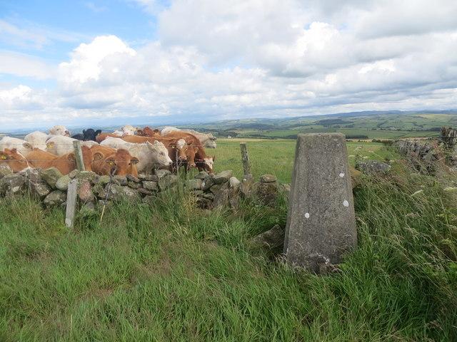 Meadownay triangulation pillar