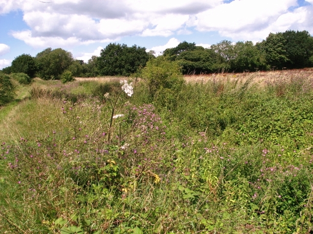 Overgrown drainage ditch beside Wash Lane