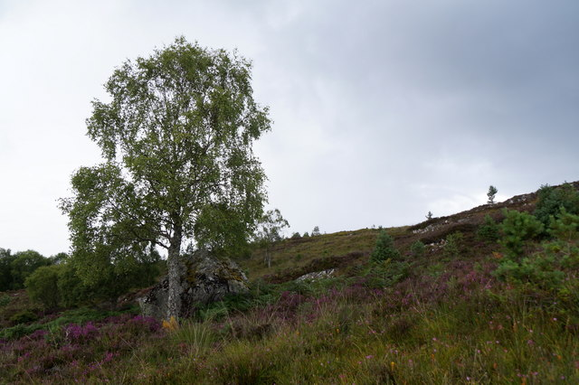 Above the woodland on the slopes of Bad A' Chamhain