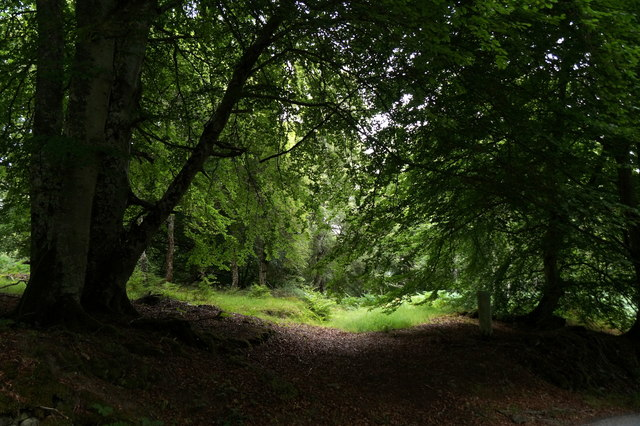 Woodland at Fanellen