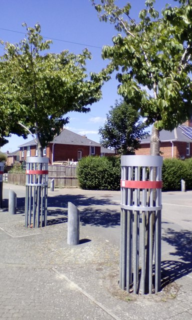 Protected trees, Holly Road. Exeter