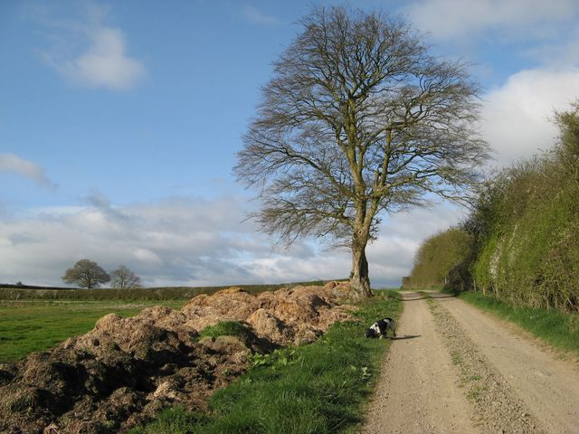 Manure heap with tree