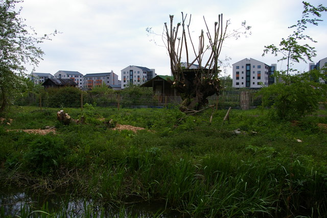 Housing on Roger Dudman Way, from the Thames towpath