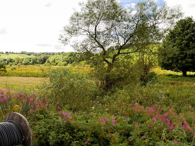 Hedge in Farmland near Basford Green
