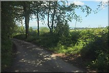 SX7352 : Lane on Storridge Moor by Derek Harper
