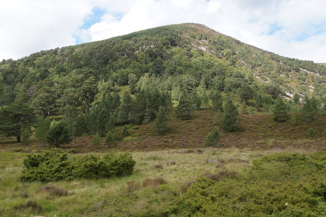 Woodland on the slope of Meall A' Bhuachaille
