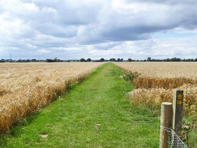 Path through cereal fields, Stambridge