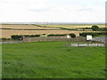 NU0642 : Fields at Beal by M J Richardson