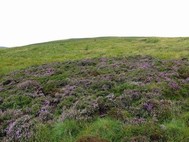 Heather flowering below Deel's Hill