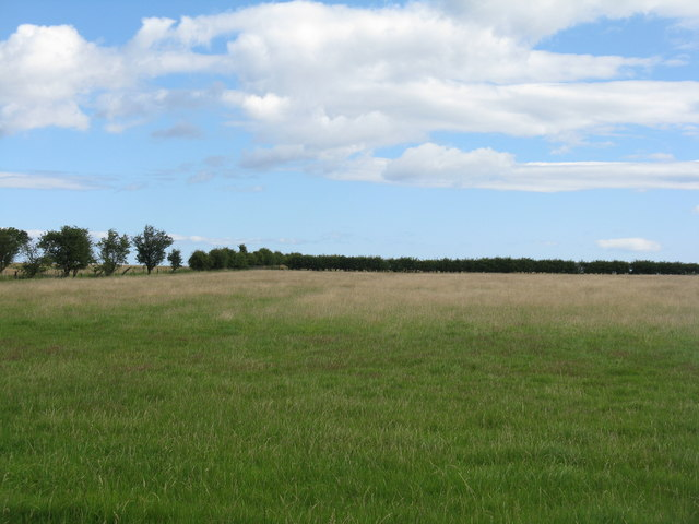 Pasture near Smeafield
