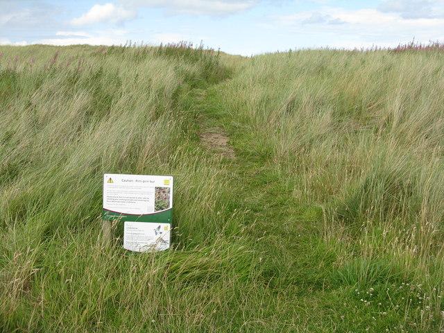 Sand dunes on Lindisfarne
