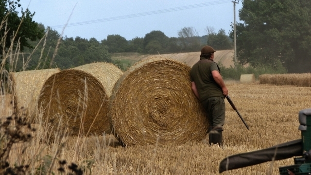 A gamekeeper at work