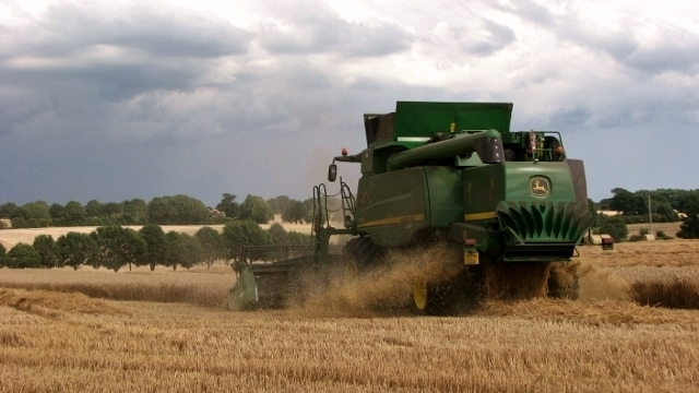 Combine harvesting a wheat crop