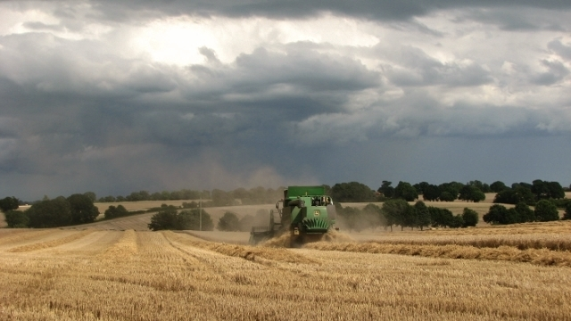 A combine harvester at work in a wheat crop field