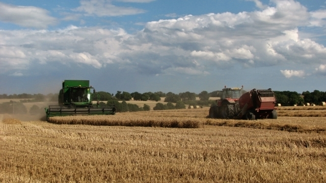 Combine and baler harvesting wheat