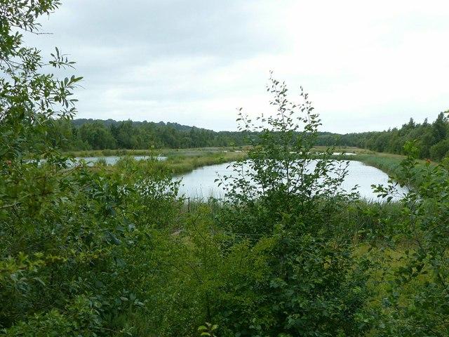 Settling ponds, Shipley Common