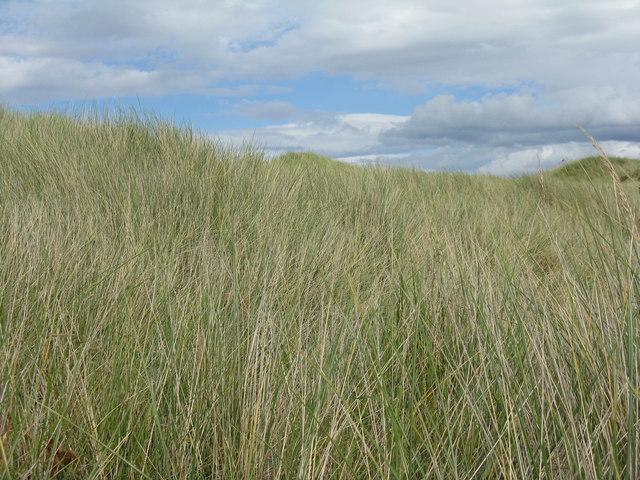 Sand dune on Holy Island