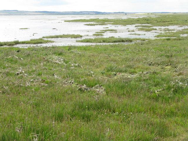 Salt marsh at Lindisfarne