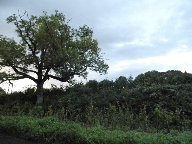 Woodlands by the B4192, Preston