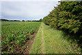 TA1137 : Path near Fairholme Farm by Ian S