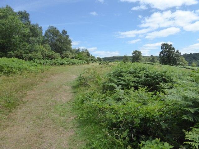Path on Piddledown Common