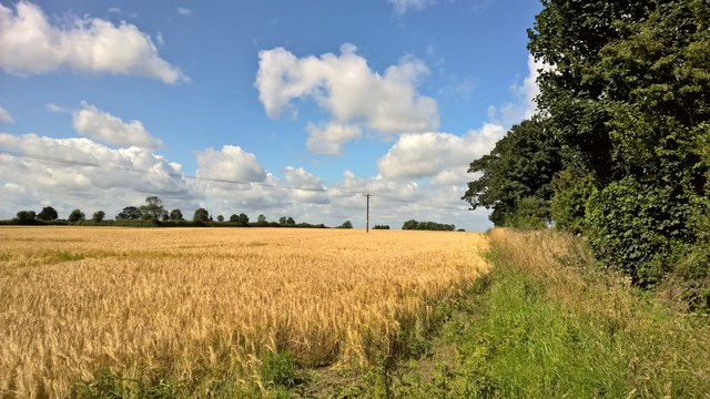 Field by Northfield Leys Road