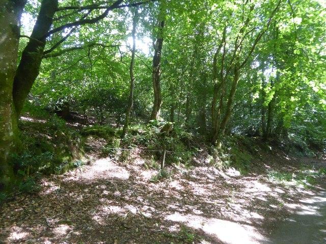 Old hedgebank below Piddledown Common