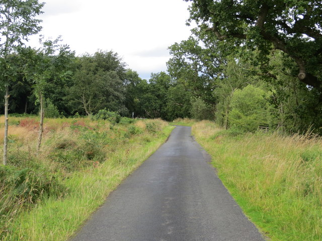 Road near to Sykes Wood