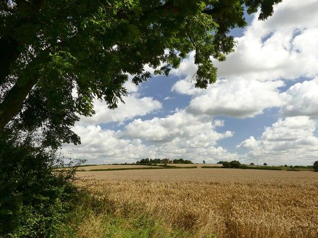 Field of barley below Wheatley Grange