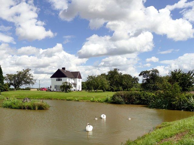 Swans on the lake at Clayworth Woodhouse