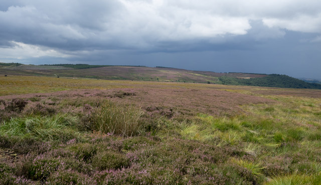 Heather moorland south-west of Miley Pike
