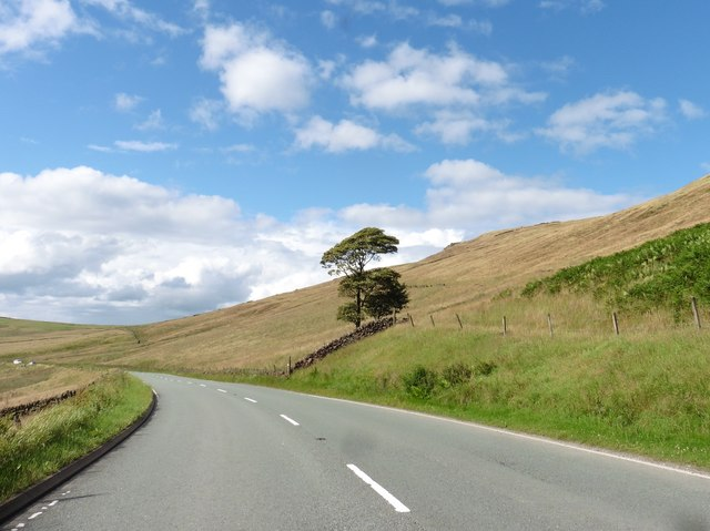 Isolated tree on the A537