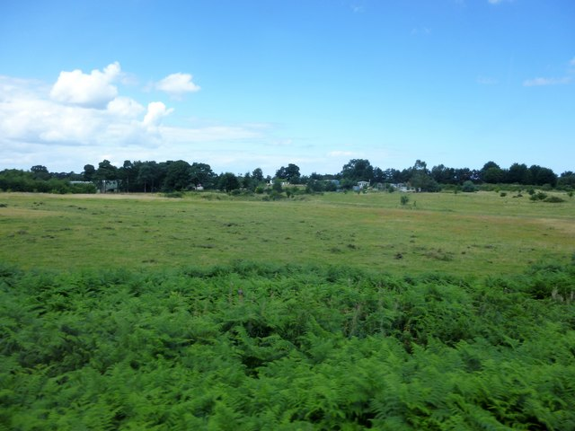 Grazing land on Kelling Heath, Norfolk