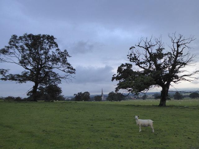 Parkland at Bodelwyddan