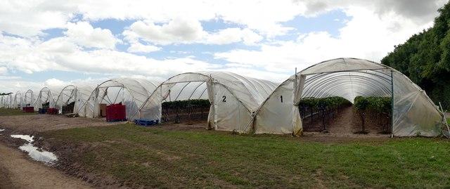 Polytunnels at Wheatley Wood Farm